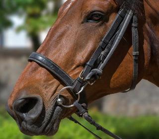 image-equitation-mise-en-avant